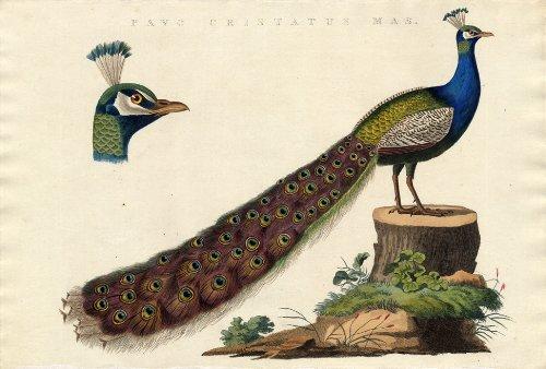 2 ThePrintsCollector karmkara diseño de-Blue-Indian dolor de apendicitis-Nozeman-1770