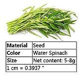 Cecelia May Vendita calda Orto Semi Foglia Verde Spinaci Semi Graden Bonsai