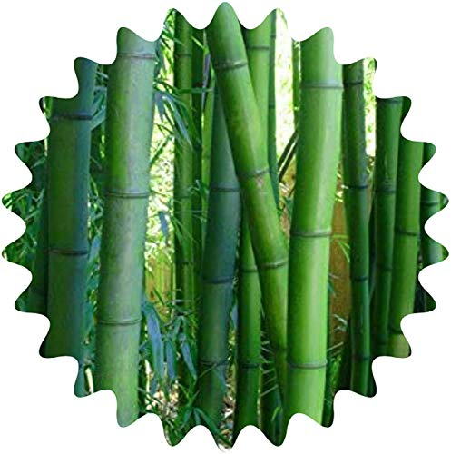 Bambú ornamental gigante, 50 semillas, protección...