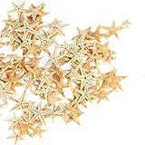 Ogrmar Small Starfish Star Sea Shell Beach Craft 0.4