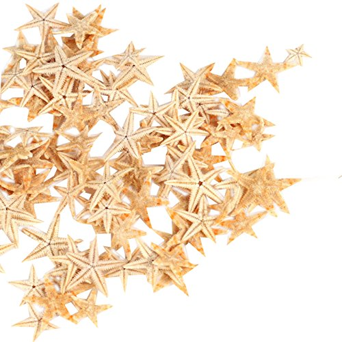 Ogrmar Small Starfish Star Sea Shell Beach Craft 0.4'-1.2' 90 Pcs