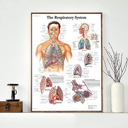 GUDOJK decoratief schilderij menselijke anatomie orgel canvas kunst poster afdrukken lichaam kaart canvas wandafbeeldingen voor medische opleiding woning 40x60cm(16x24inch)