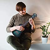 Immagine 1 winzz concert ukulele principianti adulto