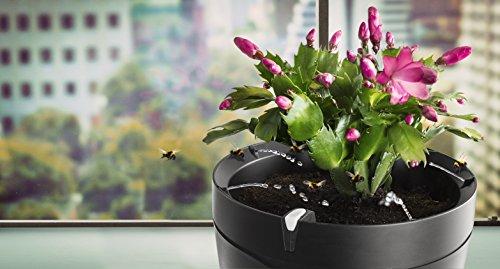 Parrot Pot - Smart, Connected Flower Pot - Black
