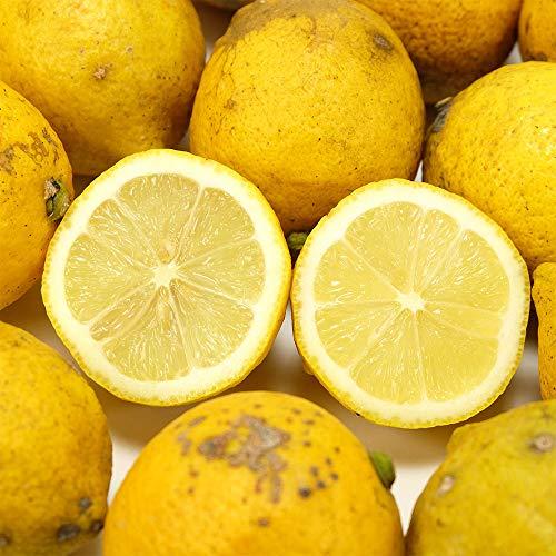 【B品・訳あり】レモン 10kg 県特別栽培(無・無)(熊本県 オレンジヒルズ) 産地直送 ふるさと21