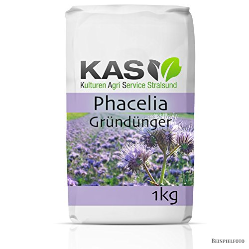 1 kg Phacelia; Gründünger, Bienenweide