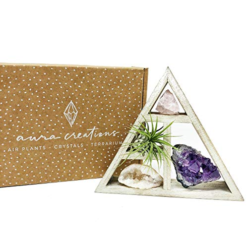 people crystals Mini Crystal + Air Plant Gift Set/Includes a 4.75 Mini Display Shelf, Tillandsia Air Plant, Purple Amethyst Cluster, Raw Rose Quartz, and Clear Quartz Point, Home dcor Accent.