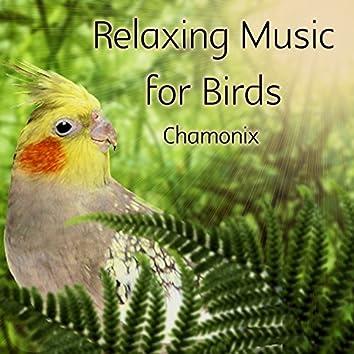 Relaxing Music for Birds
