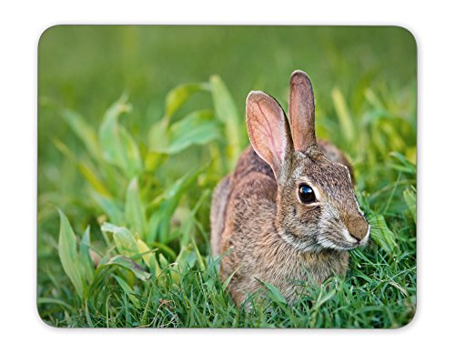 ABin Cute Looking Cottontail Bunny Rabbit Eating Grass in The Garden Mouse pad Mouse Pad The Office Mat Mouse Pad Gaming Mousepad Nonslip Rubber Backing