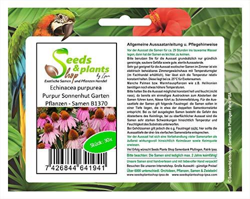 Stk - 30x Echinacea purpurea Purpur Sonnenhut Garten Pflanzen - Samen B1370 - Seeds Plants Shop Samenbank Pfullingen Patrik Ipsa