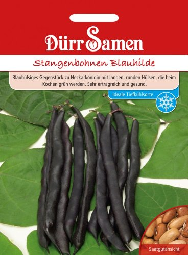 Dürr Samen 0317 Stangenbohne Blauhilde (Stangenbohnensamen)