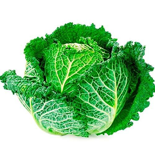 SANHOC Samen-Paket: Wirsing Vertus Gemüse Bio-Heirloom Russian Ukraine