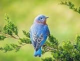 5D Diamond Painting Animal pájaro azul Diamante Pintura Kits para Adultos Niño Pintura Diamante Punto de Cruz Bordado de Diamantes de Imitación Decoración del Hogar 30x40cm