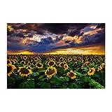 Sonnenblumen bei Sonnenuntergang in Colorado Leinwand