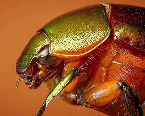 Rompecabezas para adultos 1000 piezas para adultos y niños a partir de 14 años de edad, colorido escarabajo insecto macro rompecabezas juego juguetes regalo