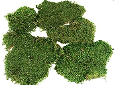 Pack of 8 OZ-Preserved Sheet Moss, Dried Green Floral Moss Sheet Moss, Natural for Fairy Gardens, Terrariums, or Any Craft or Floral Project(NAT/Green Sheet Moss)
