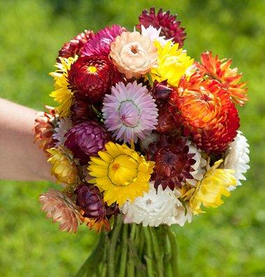 Strohblumen in einem Boquet.