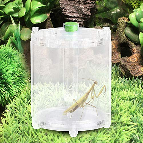 Cikonielf Caja de cría de Reptiles Acrílico Transparente Reptiles Insectos Que alimentan...