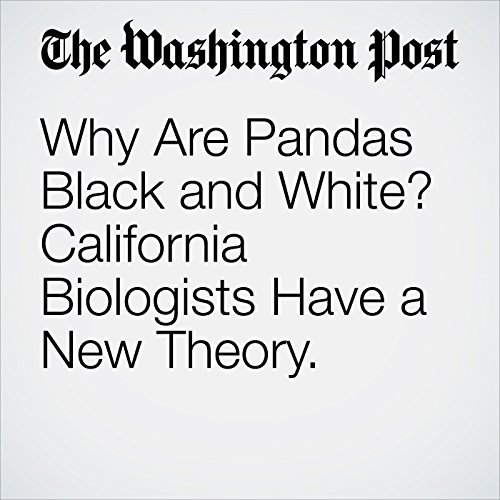 Why Are Pandas Black and White? California Biologists Have a New Theory. audiobook cover art