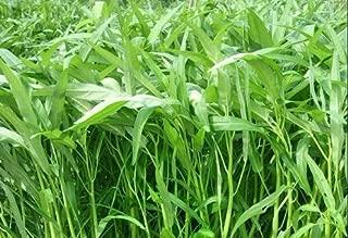Nianyan 200 Pcs/Bag Hot Sale Vegetable Garden Seeds Water kangkong Plant Leaf Green Spinach Seeds Graden Bonsai