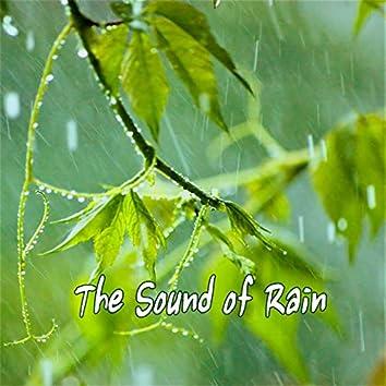 힐링되는 빗소리(자연의소리)