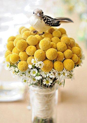 Yellow Billy Buttons 100 Samen Craspedia Globosa Blumen CombSH B83