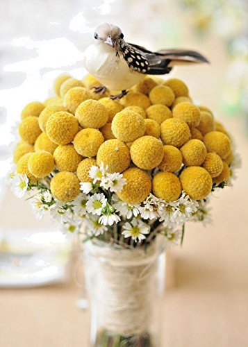 Yellow Billy Buttons 100 Samen Craspedia Globosa Blumen CombSH B83