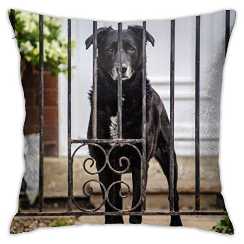 NHJYU Home Kissenbezug Hund, Tiere, Gesicht, Augen, Auge, Alt, Schwarz, Adorable Classic Decor Kissen Kissenbezug mit 18 x 18 Zoll