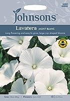 【輸入種子】 Johnsons Seeds Lavatera Mont Blanc ラヴァテラ・モンブラン ジョンソンズシード