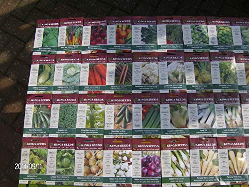 AGROBITS 51 Thym, 60 Kings VEGABLE, Pack, See, Pick Type, BGE, OIGNONS, GERMES