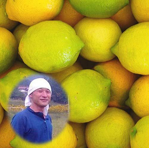 能勢さんの無農薬レモン 5kg A品 瀬戸田レモン 防腐剤 防カビ剤不使用 広島産レモン 国産レモン