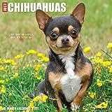 Just Chihuahuas 2021 Wall Calendar (Dog Breed Calendar)