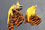 Tigofly 2 unids/lote natural dorado completo faisán cabeza y cresta salmón pesca con mosca atando plumas materiales