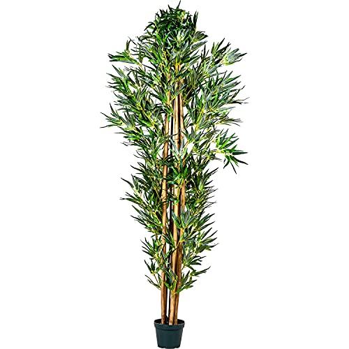 Plantasia -  ® Bambus-Strauch,