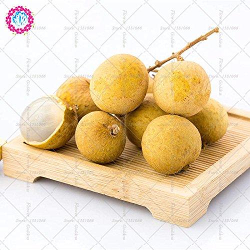 5pcs Longan fruits Graines de fruits Graines Succulent doux ou un arbre en pot Bonsai Perennia Plantes Graines jardin Cour