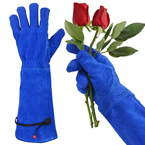 GLOSAV Professional Thorn Proof Gardening Gloves for Women and Men Rose Pruning & Cactus Trimming, Long Sleeve Heavy Duty Ladies Garden Gloves, Cowhide Leather (Small, Blue)