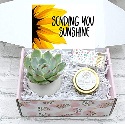 Sending You Sunshine Succulent Gift Box - Live Succulent Gift (XFA9)