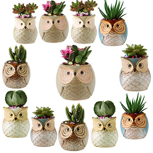 12 Pack 2.5 Inch Owl Succulent Plant Pots Ceramic Set, Cactus Plant Pot,Mini Flower Pot, with A Hole Perfect owl Gifts for Women (12)