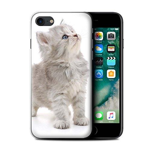 Stuff4 Carcasa/Funda Dura para el Apple iPhone 7 / Serie: Gatitos Lindos - Buscando