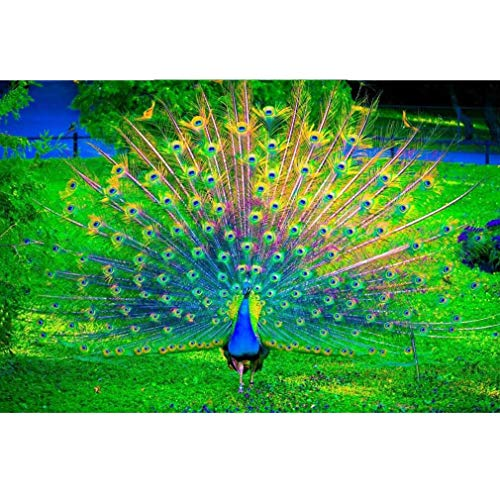 YCSD 1000 Pieces Jigsaw Puzzles For Kids Wooden Adults Family Game Puzzles - Peacock Open Screen