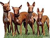 Oedim Pack 5 Pegatina Coche Perro de Caza Grupo de Podencos 20 x 16 cm | Adhesivo de Fácil...