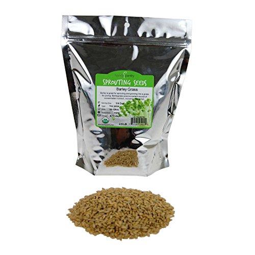 Best barley seeds organic for 2020