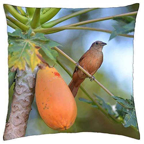 BXBX Throw Pillow Cover (20x20 Pulgadas) - Bird Papaya Thrush Birdie