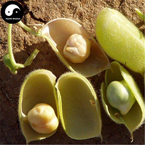 Kaufen Cicer arietinum Bohnen Gemüsesamen 120pcs Pflanze Chinese Kichererbse König Bohnen