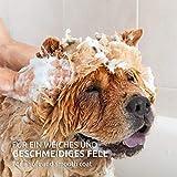 AniForte pflanzliches Neemöl Shampoo 400 ml Hundeshampoo parfümfrei – Naturprodukt für Hunde - 2