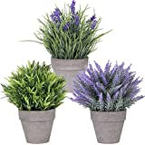 Set of 3 Artificial Lavender Flower Grass Arrangements in Pots Assorted Fake Mini Potted Plants for Farmhouse Kitchen Office Bathroom Table Centerpiece Rustic Country French Indoor Floral Decorations