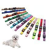 Lot de 12 colliers d'identification réglables en nylon pour chien de petite taille et chat