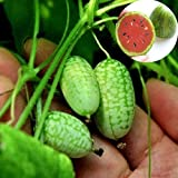 Mini semi di anguria, 10 pezzi / borsa Mini semi di anguria facili da piantare deliziosi frutti raccolti da giardino Mini semi di anguria per cortile