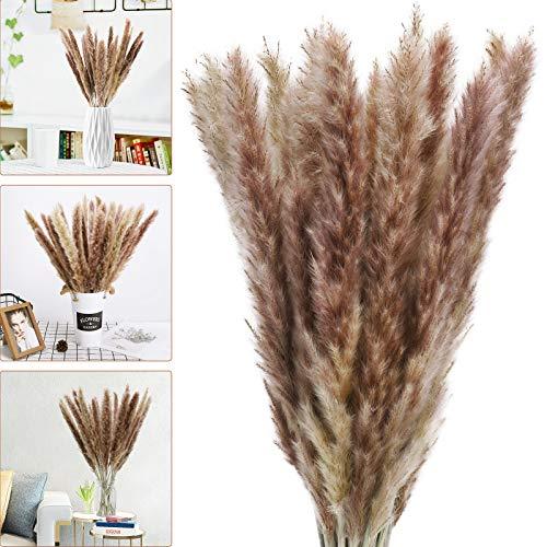 Bearbro 30pcs Décoration d'herbe de Pampa, 58cm Fleurs...