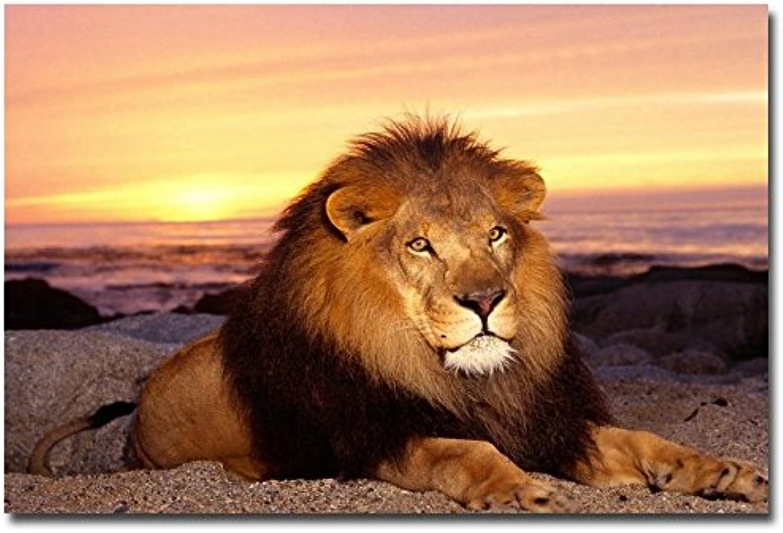 tienda en linea LIEFENGDAO Puesta De De De Sol - Lion Nature Art Seda Poster Print 12X18 24X36 Pulgadas Fotos De Paisajes Home Room Decor Wild Animals, 24X36  precios razonables